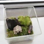 苔のテラリウムをメンテナンス