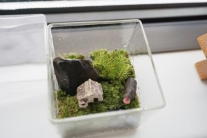 苔のテラリウム