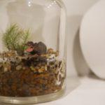 瓶の中の小さな世界、苔のテラリウムを作りました